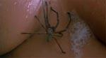 En af byens unge kvinder i bad med en edderkop.. bvadr! (Brysterne fejler ingenting)