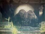 Kæmpeedderkoppen! Det mærkelige lysskær er solen, der reflekteres i Mordors Skjold.