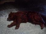 Skabningen har fået sig en bid kat, og nej det er ikke Alf fra Melmac