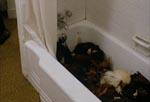 Et gustent billede af et badekar fyldt med døde haner