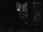 Ulvemånen kaster sit lys.