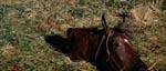 Selv en hest bliver angrebet og får hovedet flået af.