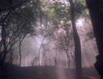 De ikke-så-skumle skove, hvor der sker ikke-så-meget