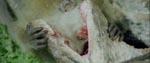 De obligatoriske billeder af lidende dyr.