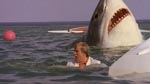 Hajen dukker op af vandet for første gang