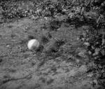 Den lille piges bold.