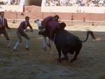 Op på tyrens horn, idioter!