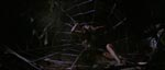 Fanget i edderkoppens net