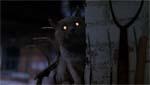Katten er vendt tilbage fra de døde, og har åbenbart været ved optiker på vejen.