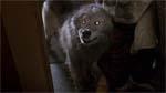 Hunden vender selvfølgelig tilbage som en ren helvedeshund.