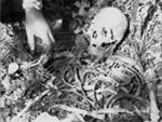 Et skelet findes.