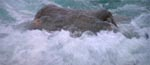 Blæksprutten i overfladen