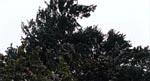 Træer, der blæser i vinden. Knap så uhyggeligt.