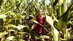 Store mængder majs i gyserfilm er sjældent et godt tegn...