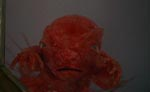 Dæmonisk kryb dækket af slim og fostervand!