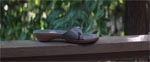 På naboens veranda finder Claire en enkelt sko.. er det blod, der er på den?