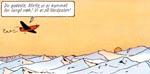 Mads, Mette og Sjoko havner på Nordpolen!